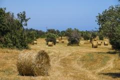 Стоги сена на поле. остров Кипр.