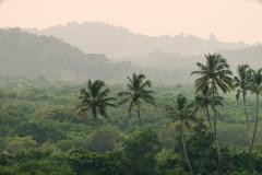 Утренний пейзаж в Гоа. Индия