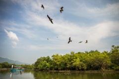 Дикие птицы кружат над лодкой. Индия.