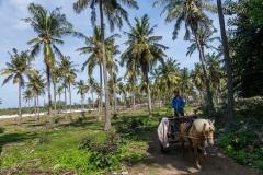 Крестьянин на повозке. Остров Гили Траванган. Индонезия.