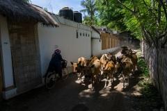 Улочки Травангана. Острова Гили. Индонезия.