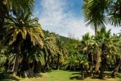Пальмовый сад в Пицунде. Абхазия