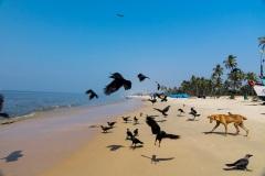 Пляжная жизнь в Гоа. Индия