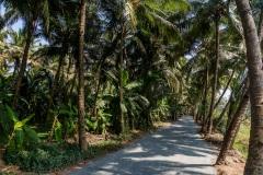 Дорога под пальмами. Гоа. Индия