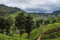 Чайные плантации Нувара-Элии. Центральная часть Шри Ланки.