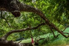 В окрестностях Пуэрто Принцесса. Остров Палаван. Филиппины.