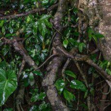 Убуд. Остров Бали. Тропическая Индонезия.