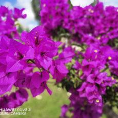 Далат - цветочный город Вьетнама.